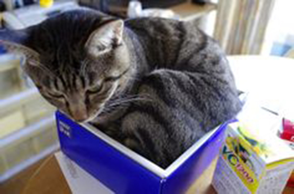 if i fits i sits cat in a box 422 If I Fits I Sits: 500 Cats in a Box MEGA Compilation Page 5