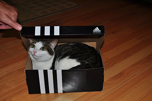 if i fits i sits cat in a box 492 If I Fits I Sits: 500 Cats in a Box MEGA Compilation Page 5