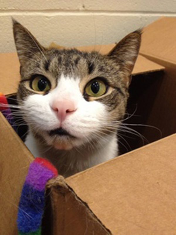 if i fits i sits cat in a box 433 If I Fits I Sits: 500 Cats in a Box MEGA Compilation Page 5
