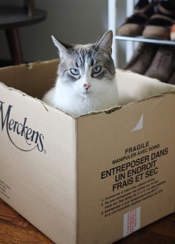 if i fits i sits cat in a box 410 If I Fits I Sits: 500 Cats in a Box MEGA Compilation Page 5