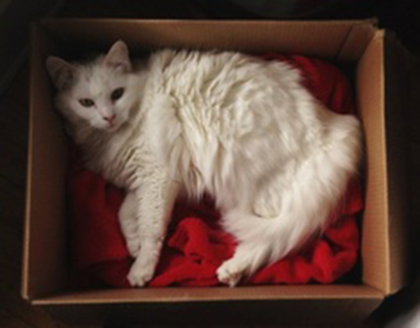 if i fits i sits cat in a box 437 If I Fits I Sits: 500 Cats in a Box MEGA Compilation Page 5