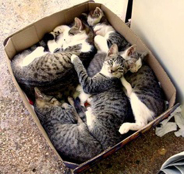 if i fits i sits cat in a box 430 If I Fits I Sits: 500 Cats in a Box MEGA Compilation Page 5