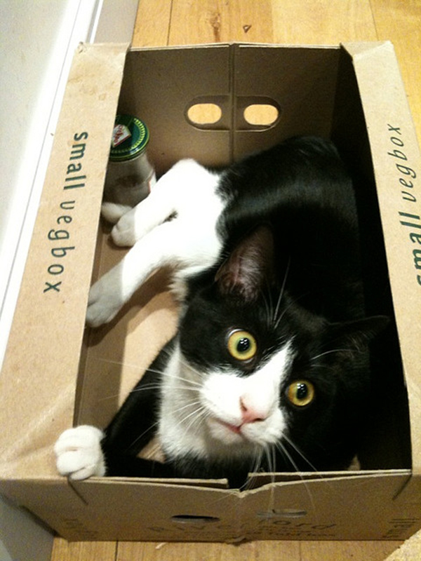 if i fits i sits cat in a box 402 If I Fits I Sits: 500 Cats in a Box MEGA Compilation Page 5