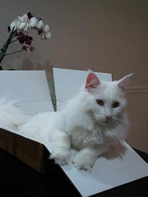 if i fits i sits cat in a box 444 If I Fits I Sits: 500 Cats in a Box MEGA Compilation Page 5