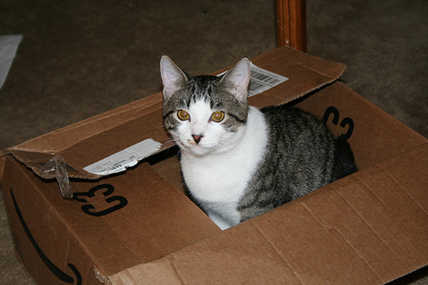 if i fits i sits cat in a box 405 If I Fits I Sits: 500 Cats in a Box MEGA Compilation Page 5
