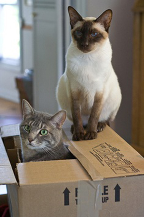 if i fits i sits cat in a box 428 If I Fits I Sits: 500 Cats in a Box MEGA Compilation Page 5