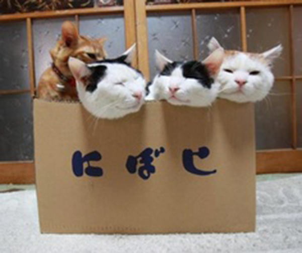if i fits i sits cat in a box 436 If I Fits I Sits: 500 Cats in a Box MEGA Compilation Page 5