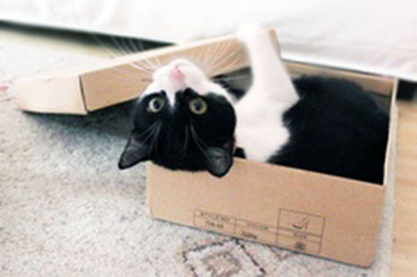if i fits i sits cat in a box 454 If I Fits I Sits: 500 Cats in a Box MEGA Compilation Page 5