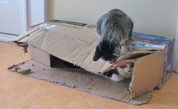 if i fits i sits cat in a box 501 If I Fits I Sits: 500 Cats in a Box MEGA Compilation Page 5