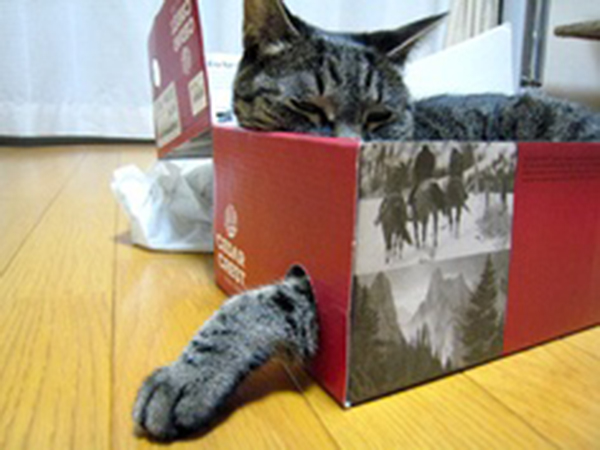 if i fits i sits cat in a box 427 If I Fits I Sits: 500 Cats in a Box MEGA Compilation Page 5