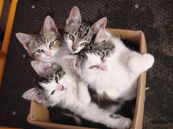 if i fits i sits cat in a box 349 If I Fits I Sits: 500 Cats in a Box MEGA Compilation Page 4