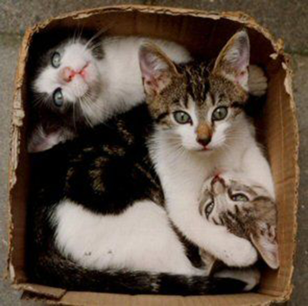 if i fits i sits cat in a box 384 If I Fits I Sits: 500 Cats in a Box MEGA Compilation Page 4