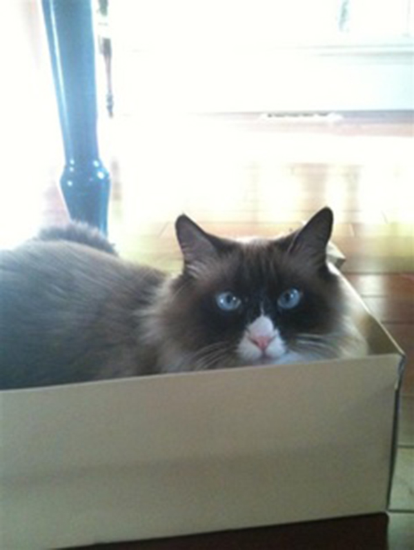 if i fits i sits cat in a box 434 If I Fits I Sits: 500 Cats in a Box MEGA Compilation Page 5