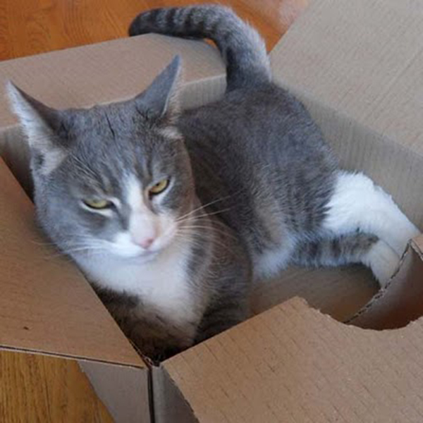 if i fits i sits cat in a box 498 If I Fits I Sits: 500 Cats in a Box MEGA Compilation Page 5