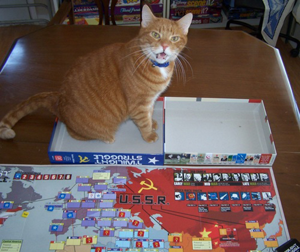 if i fits i sits cat in a box 496 If I Fits I Sits: 500 Cats in a Box MEGA Compilation Page 5