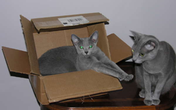 if i fits i sits cat in a box 415 If I Fits I Sits: 500 Cats in a Box MEGA Compilation Page 5