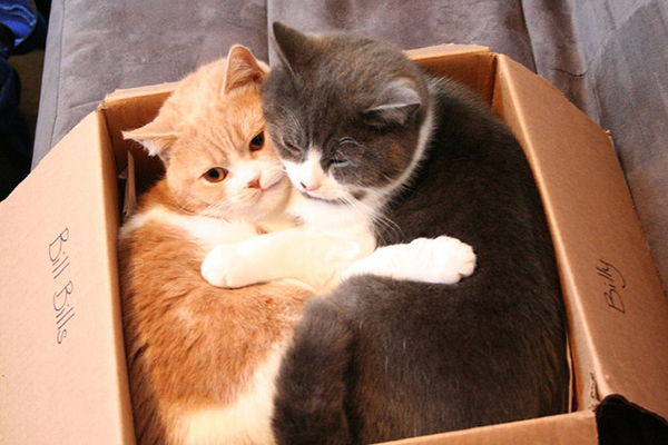 if i fits i sits cat in a box 364 If I Fits I Sits: 500 Cats in a Box MEGA Compilation Page 4