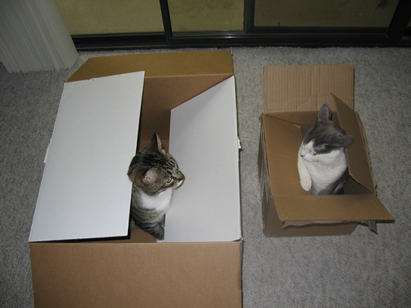 if i fits i sits cat in a box 301 If I Fits I Sits: 500 Cats in a Box MEGA Compilation Page 4