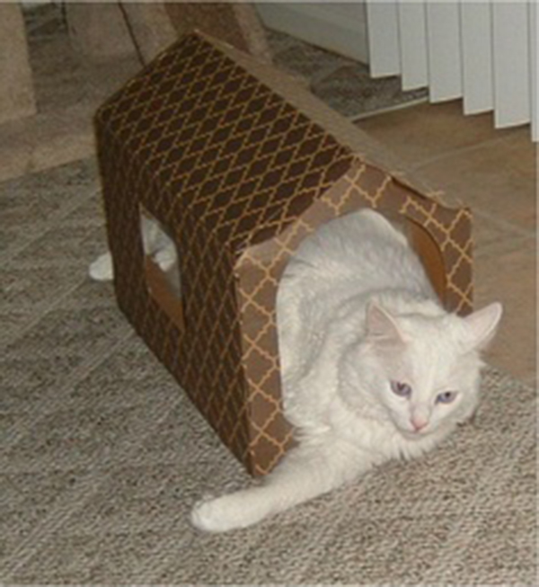 if i fits i sits cat in a box 482 If I Fits I Sits: 500 Cats in a Box MEGA Compilation Page 5