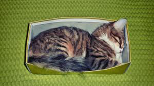 if i fits i sits cat in a box 319 If I Fits I Sits: 500 Cats in a Box MEGA Compilation Page 4