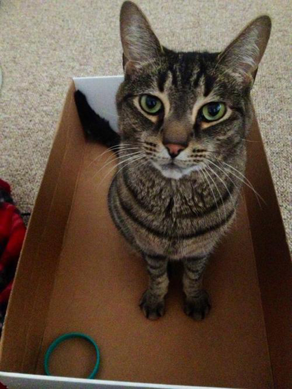 if i fits i sits cat in a box 395 If I Fits I Sits: 500 Cats in a Box MEGA Compilation Page 4