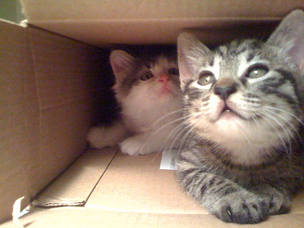 if i fits i sits cat in a box 334 If I Fits I Sits: 500 Cats in a Box MEGA Compilation Page 4