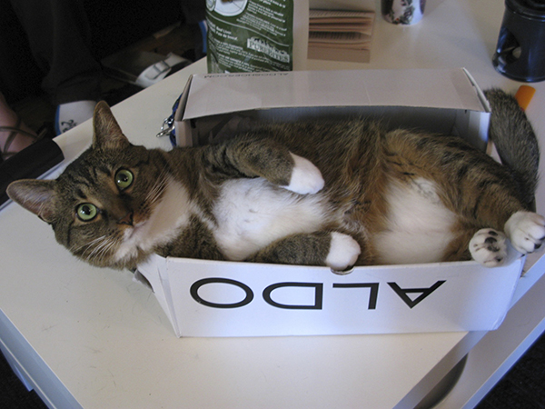 if i fits i sits cat in a box 351 If I Fits I Sits: 500 Cats in a Box MEGA Compilation Page 4