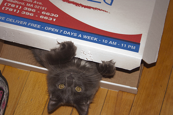 if i fits i sits cat in a box 310 If I Fits I Sits: 500 Cats in a Box MEGA Compilation Page 4