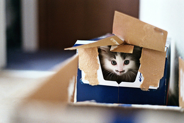 if i fits i sits cat in a box 333 If I Fits I Sits: 500 Cats in a Box MEGA Compilation Page 4