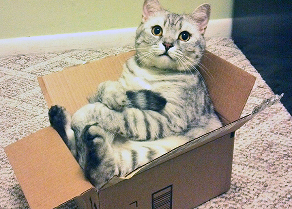 if i fits i sits cat in a box 346 If I Fits I Sits: 500 Cats in a Box MEGA Compilation Page 4