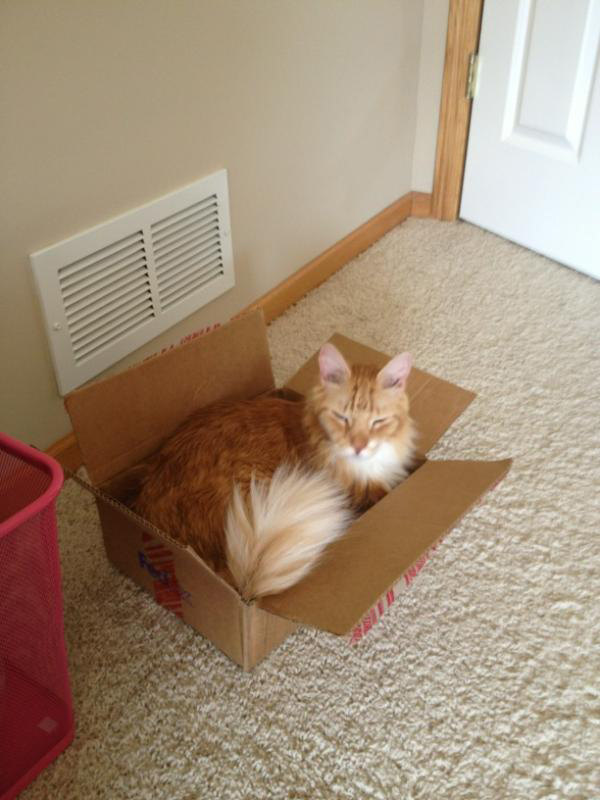 if i fits i sits cat in a box 323 If I Fits I Sits: 500 Cats in a Box MEGA Compilation Page 4