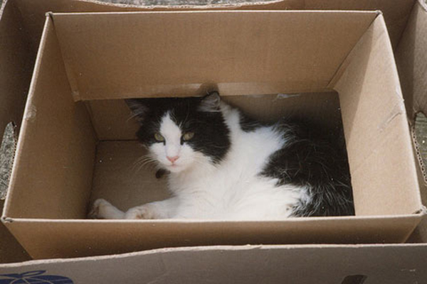if i fits i sits cat in a box 324 If I Fits I Sits: 500 Cats in a Box MEGA Compilation Page 4