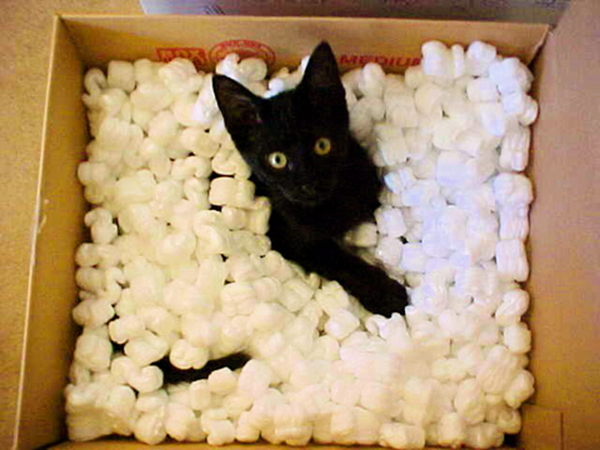 if i fits i sits cat in a box 362 If I Fits I Sits: 500 Cats in a Box MEGA Compilation Page 4