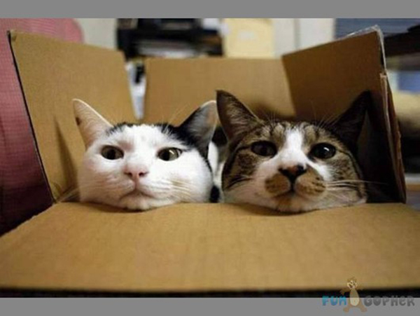 if i fits i sits cat in a box 341 If I Fits I Sits: 500 Cats in a Box MEGA Compilation Page 4