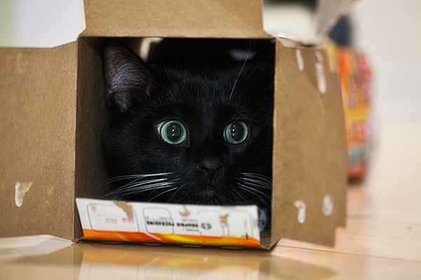 if i fits i sits cat in a box 348 If I Fits I Sits: 500 Cats in a Box MEGA Compilation Page 4