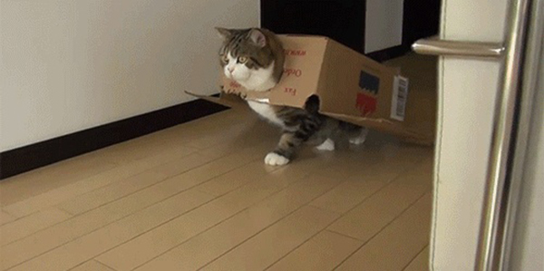 if i fits i sits cat in a box 385 If I Fits I Sits: 500 Cats in a Box MEGA Compilation Page 4