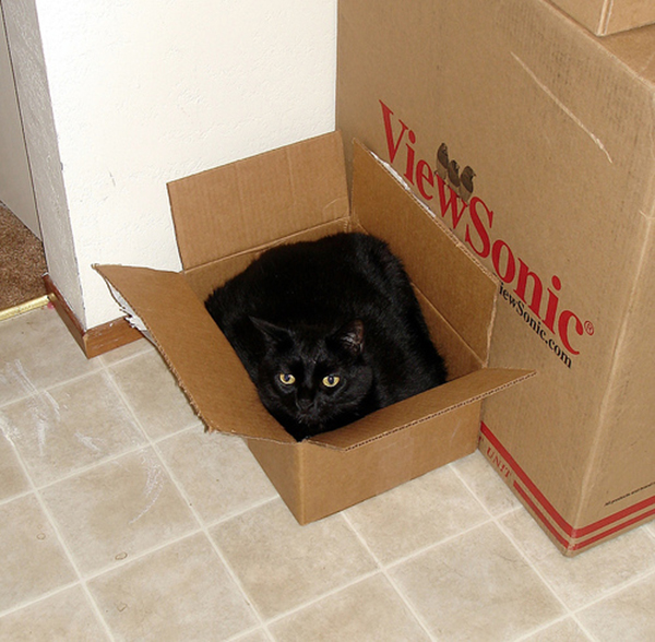 if i fits i sits cat in a box 464 If I Fits I Sits: 500 Cats in a Box MEGA Compilation Page 5