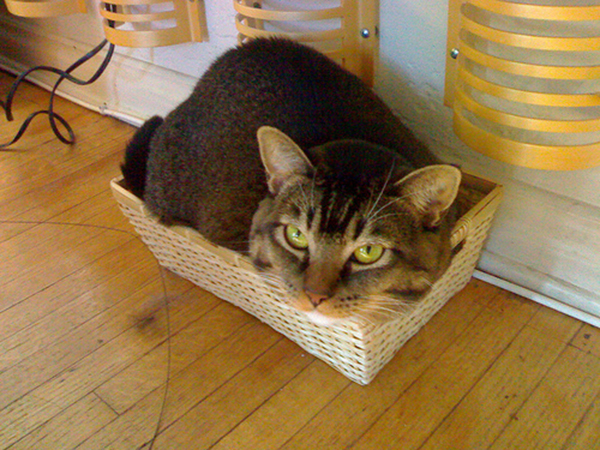 if i fits i sits cat in a box 350 If I Fits I Sits: 500 Cats in a Box MEGA Compilation Page 4