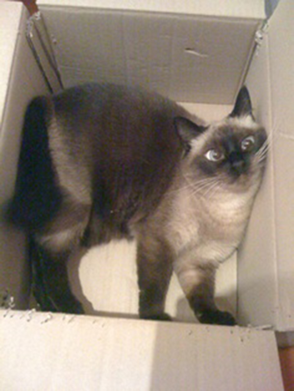 if i fits i sits cat in a box 373 If I Fits I Sits: 500 Cats in a Box MEGA Compilation Page 4