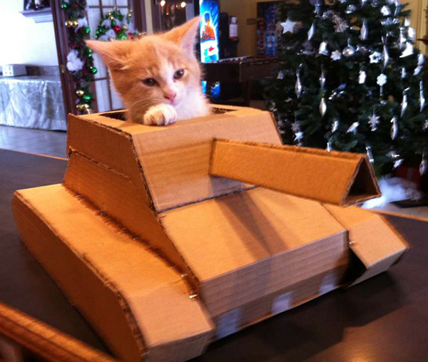 if i fits i sits cat in a box 335 If I Fits I Sits: 500 Cats in a Box MEGA Compilation Page 4