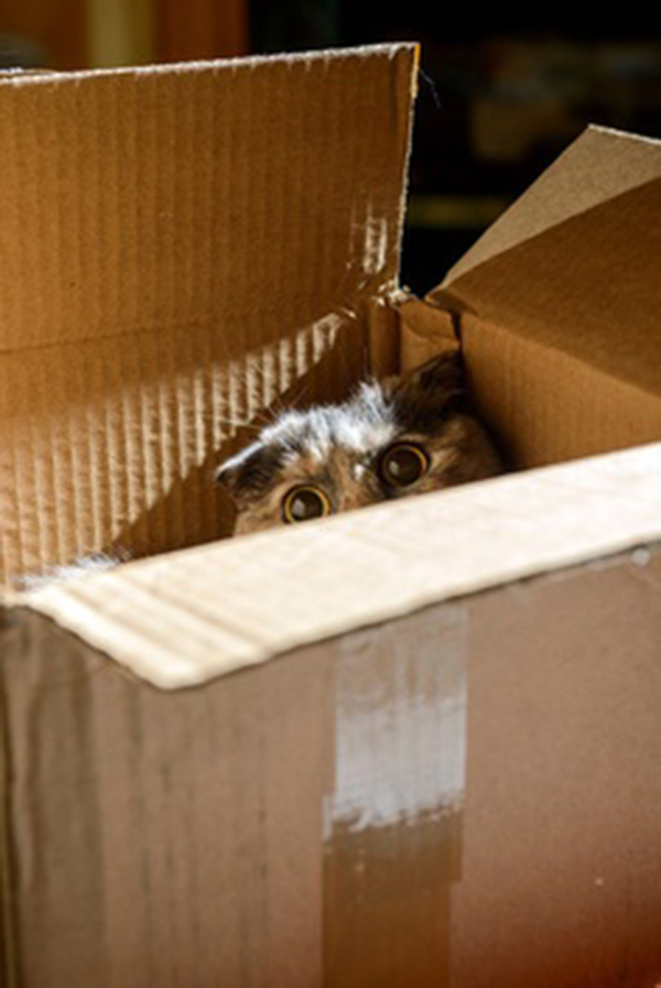 if i fits i sits cat in a box 374 If I Fits I Sits: 500 Cats in a Box MEGA Compilation Page 4