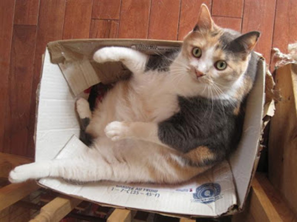 if i fits i sits cat in a box 357 If I Fits I Sits: 500 Cats in a Box MEGA Compilation Page 4
