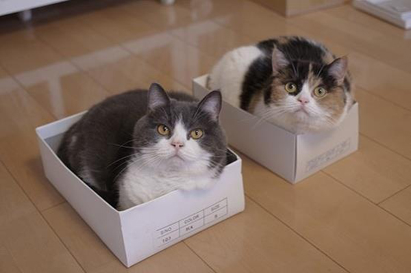 if i fits i sits cat in a box 394 If I Fits I Sits: 500 Cats in a Box MEGA Compilation Page 4