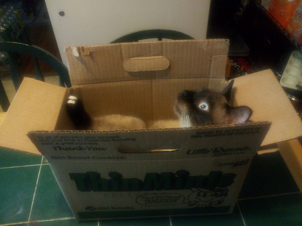 if i fits i sits cat in a box 318 If I Fits I Sits: 500 Cats in a Box MEGA Compilation Page 4