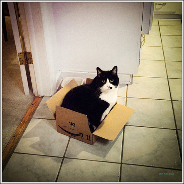 if i fits i sits cat in a box 359 If I Fits I Sits: 500 Cats in a Box MEGA Compilation Page 4