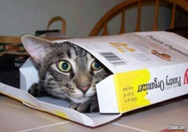 if i fits i sits cat in a box 379 If I Fits I Sits: 500 Cats in a Box MEGA Compilation Page 4