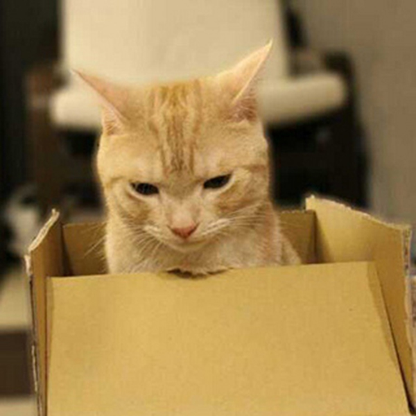if i fits i sits cat in a box 397 If I Fits I Sits: 500 Cats in a Box MEGA Compilation Page 4
