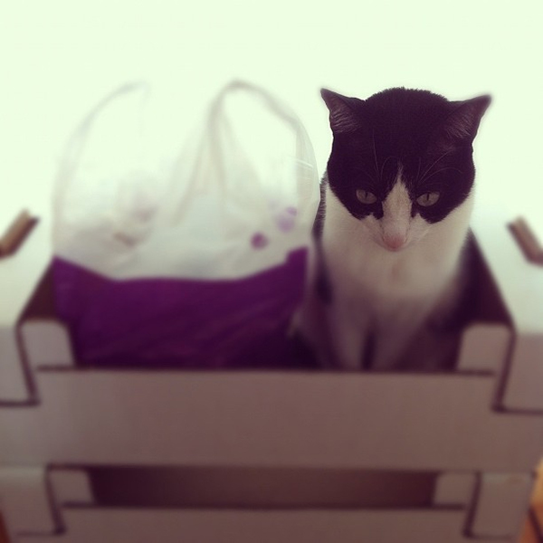 if i fits i sits cat in a box 338 If I Fits I Sits: 500 Cats in a Box MEGA Compilation Page 4