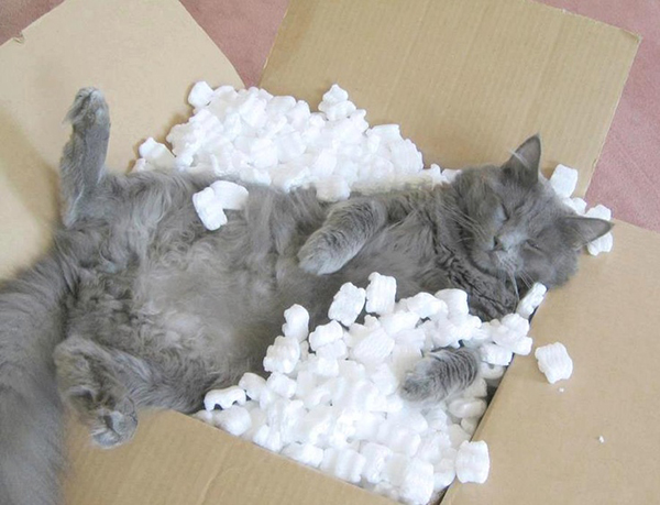 if i fits i sits cat in a box 377 If I Fits I Sits: 500 Cats in a Box MEGA Compilation Page 4