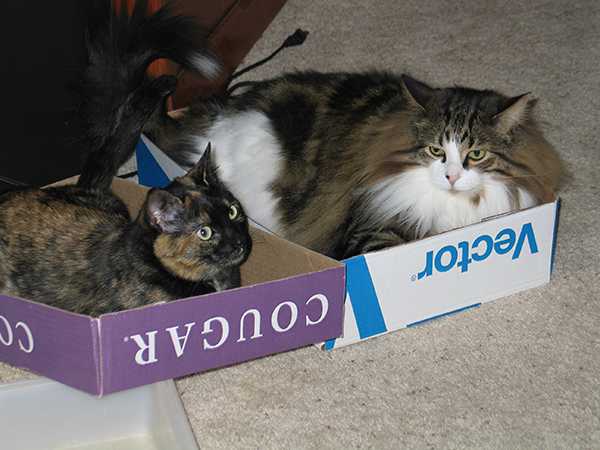 if i fits i sits cat in a box 353 If I Fits I Sits: 500 Cats in a Box MEGA Compilation Page 4